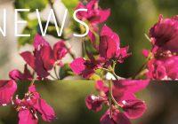 Buchinger Wilhelmi, Fasten, Heilfasten, Fasting, Health, Integrative Medicine, News Buchinger Wilhelmi